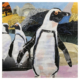 African penguins mixed media artwork